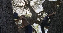 the tree of life,terrence malick,brad pitt,Jessica Chastain,sean penn,lawless